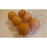 Vajcia L 6ks/SHP