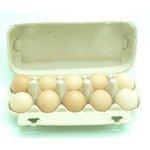Vajcia L 10ks/SHP